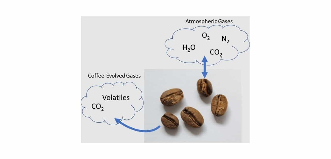 What Affects the Freshness of the Coffee